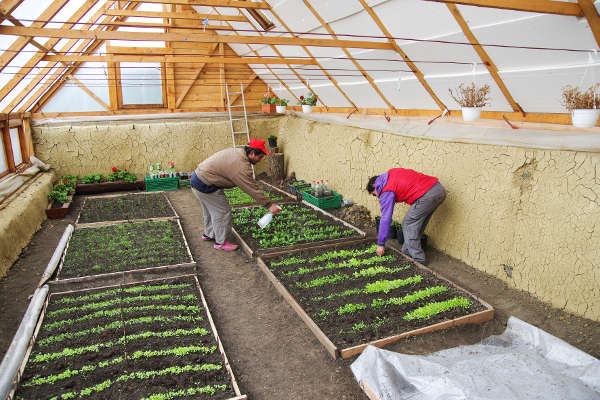 Maintenance of greenhouse plantations - 2015 - Emmaus Iasi Romania
