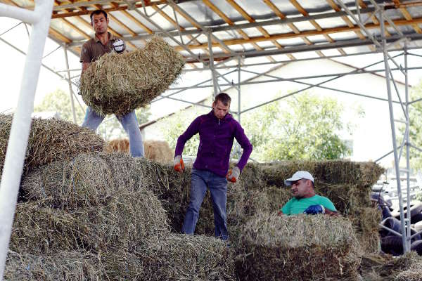 Storing hay with companions of Popesti – 2017 - Emmaus Iasi Romania